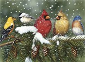 Backyard Birds On Snowy Branch