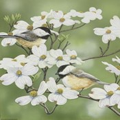 Springtime And Chickadees