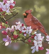 Cardinal with Apple Blossoms