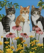 Backyard Kittens