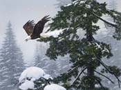 Soaring Eagle / Winter