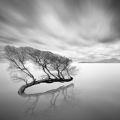 Water Tree VII