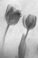 Flowers on Ice-1
