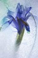 Flowers on Ice-6