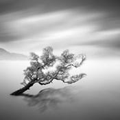 Water Tree VI
