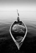 Canoe And A Heron