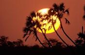 Sunrise behind silhouetted trees, Kenya, Africa