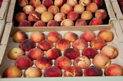 Peaches at a market stall, Lourmarin, Vaucluse, Provence-Alpes-Cote d'Azur, France