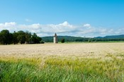 Wheat field with a tower, Meyrargues, Bouches-Du-Rhone, Provence-Alpes-Cote d'Azur, France