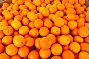 Close-up of oranges, Santa Paula, Ventura County, California, USA