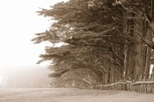 Cypress trees along a farm, Fort Bragg, California, USA