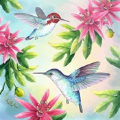 Bee Hummingbirds