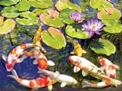 Koi Pond III