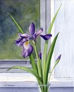 Blue Flag-Wild Iris