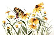 Butterfly & Black Eyed Susans