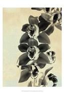 Orchid Blush Panels IV