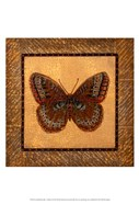 Crackled Butterfly - Fritillary
