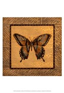 Crackled Butterfly - Swallowtail
