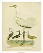 Antique Crane & Heron