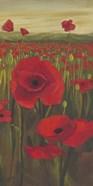 Red Poppies in Field II