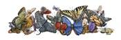 Wings of Splendor I