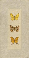 Butterfly Trio I
