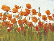 Rows of Poppies II