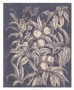 Vintage Fruit & Floral II