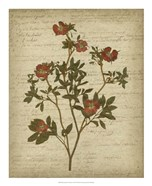 Romantic Pressed Flowers I