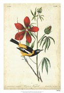 Audubon Bird & Botanical I