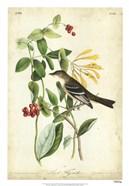 Audubon Bird & Botanical II