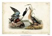 Audubon Ducks I