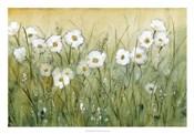 Daisy Spring II