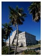 Palm trees near El Castillo