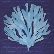 Blue Coral