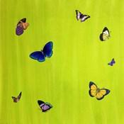 Flutter H