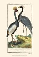 Buffon Cranes & Herons II