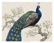 Peacock & Blossoms I