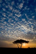 Africa. Tanzania. Sunrise in Serengeti NP.