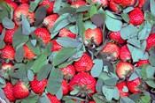 China, Chongqing, Strawberries in fruit market
