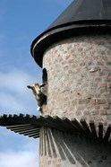 Fairview winery, goat tower, Paarl, South Africa