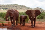 Elephants and baby, Tsavo East NP, Kenya.
