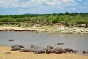 Hippopotamus, Mara River, Serengeti NP, Tanzania