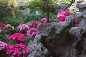 Flowers and Rocks in Traditional Chinese Garden, China
