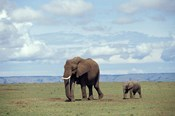 African baby elephant with mother, Masai Mara Game Reserve, Kenya