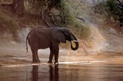 Elephant at Water Hole, South Africa
