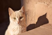 Cat inside kasbah de Taourirt; same clay color!