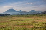 Farmland around Kisoro, Kigezi, Africa