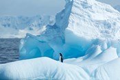 Antarctica, Gentoo Penguin standing on iceberg near Enterprise Island.