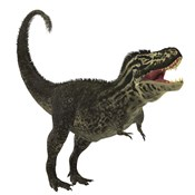 Tyrannosaurus Rex, a large predatory beast of the Cretaceous period